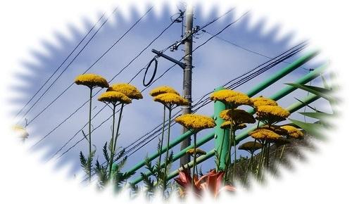 散歩道の花2.jpg